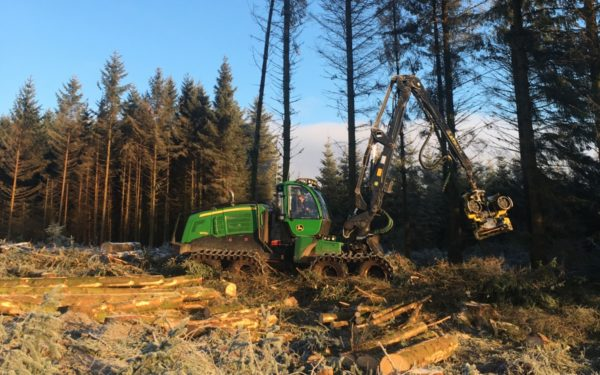 kingan forestry